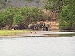 Five elephants drinking from a flooded field from afar.